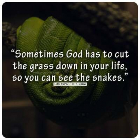 Sometimes God has to cut the grass down in your life, so you can see the snakes.
